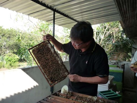 These bees are a healthy lot!