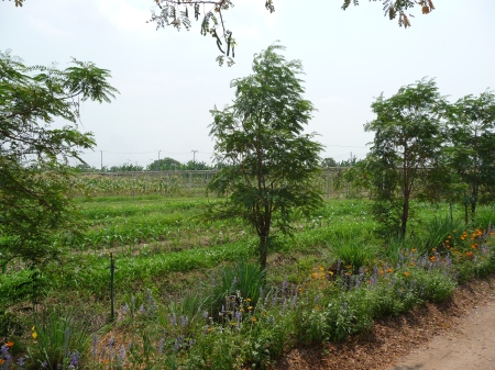 Model agricultural farm for Thai farmers.