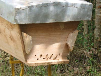 Closer view of the hive with a new colony.
